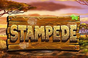 stampede